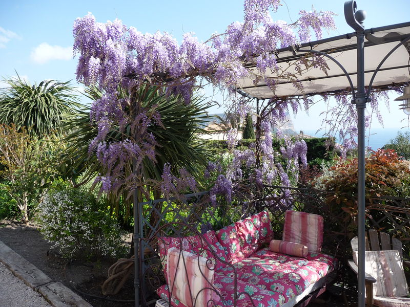 visualiser pergola glycine