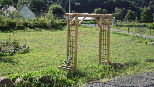 photo pergola pour rosier grimpant