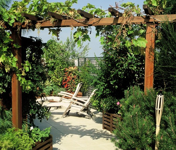 illustration pergola vigne